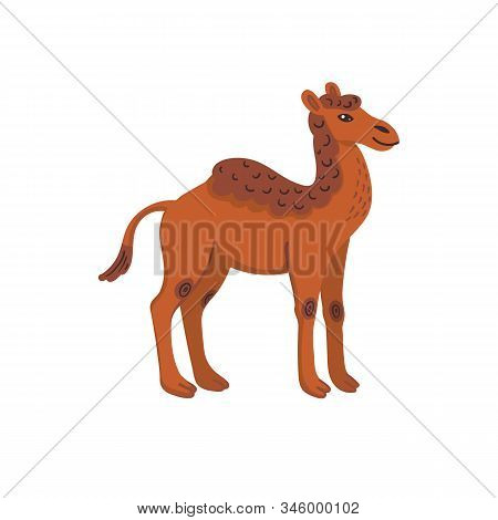 Extinct Animals. Camelops, Western Camel. Prehistoric Extinct American One-humped Camel. Flat Style
