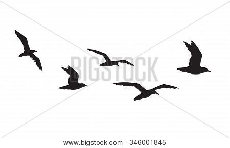 Vector Black Flock Of Seagulls Flying Silhouette Isolated On White Background