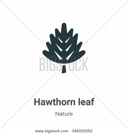 Hawthorn leaf icon isolated on white background from nature collection. Hawthorn leaf icon trendy an