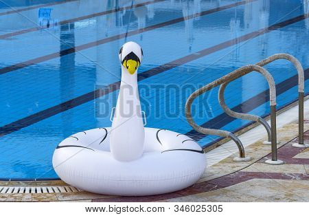 Inflatable Swan Near The Swimming Pool At The Dead Sea