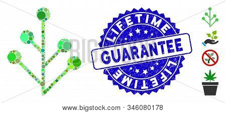 Mosaic Plant Sprout Icon And Corroded Stamp Seal With Lifetime Guarantee Phrase. Mosaic Vector Is Fo
