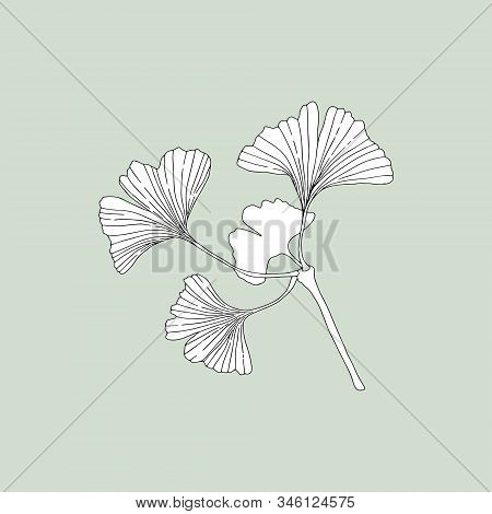 Monochrome Ginkgo (ginkgo Biloba) On A Green Background. Can Be Used For Cards, Invitations, Adverti