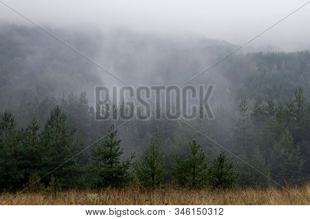 Rainy Morning In Mountains. Fog In Mountain Spruce Forest, Summer Landscape. Evaporation Rises From