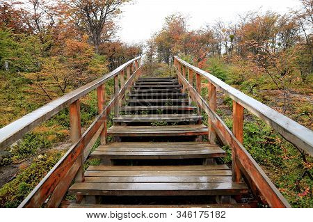 Empty Wooden Boardwalk After The Rain Amongst Fall Foliage