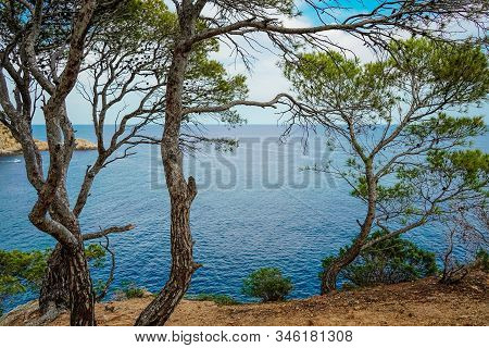 Top View Of The Turquoise Mediterranean Sea, Rocks And Bay, Through The Trees