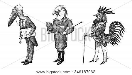 Bird Man, Eagle And Marabou Head In Military Uniform. Dressed Rooster Or Cock Cowboy. Hand Drawn Fas