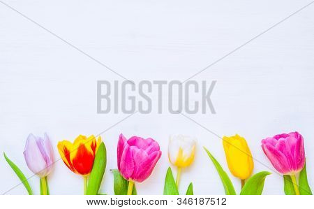 Lovely spring tulip flowers on wooden backdrop, spring holiday postcard. Spring flower background with spring tulip flowers ,free space for text, colorful spring background