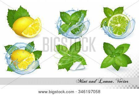Collection Of Fresh Mint And Melissa Leaves With Lemon And Lime In Splash Of Water. Vector Set