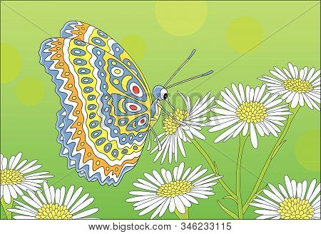 Ornate Bright Butterfly Drinking Nectar On A White And Yellow Wildflower On A Green Summer Field, Ve
