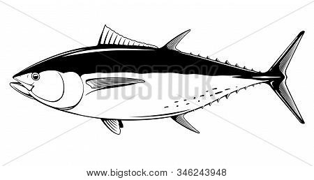 Atlantic Bluefin Tuna Fish In Side View In Black And White Isolated Illustration, Realistic Sea Fish