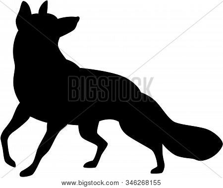 Illustration Of A Fox Silhouette, Isolated. Vector Illustration