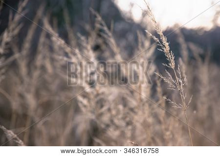 Meadow In Sunset In Nature. Sunset In Meadow Nature Background. Close Up Of Meadow In Nature. Macro