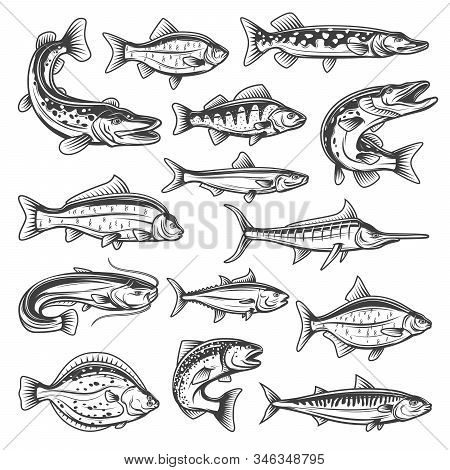 Vector Fish Species, Ocean, Sea And Freshwater. Fishing Sport Theme, Pike And Salmon, Tuna And Marli