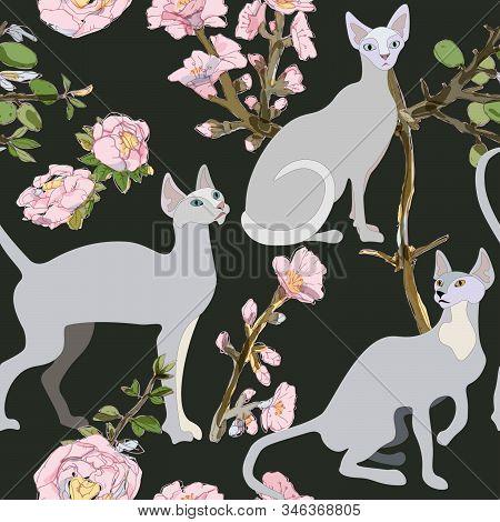Three Gray Siamese Or Sphinx Cats In Sakura Flowers On A Black Background Seamless Vector Illustrati