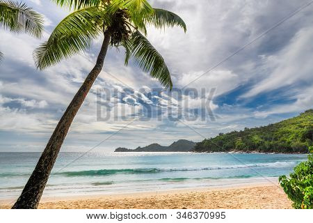 Palm Trees On Sunny Beach And Turquoise Sea.  Summer Vacation And Tropical Beach Concept.