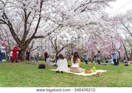 Hirosaki Park Cherry Blossoms Matsuri Festival In Springtime Season Sunny Day Morning. Visitors Enjo