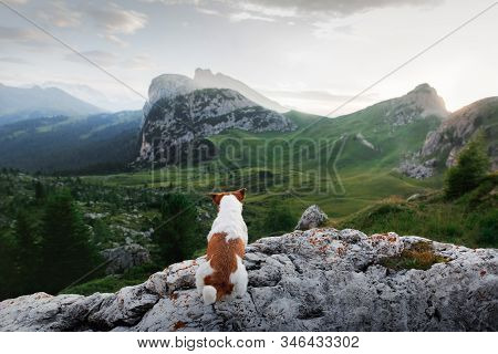 Little Dog In The Mountains. Jack Russell Terrier In Nature. Italian Dolomites. Landscape, Mood Hiki