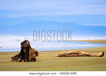 Vast Windswept Sandy Beach With Driftwood Besides The Pacific Ocean Taken On The Rural Northern Cali