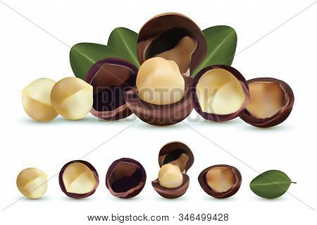 Nuts Macadamia Isolated On White Background. Nuts Shelled And Unshelled With Green Leaf. Tasty Macad