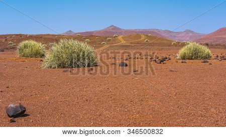 Scenic View Of The Palmwag Concession Area With Milkbushes In Namibia In Africa.
