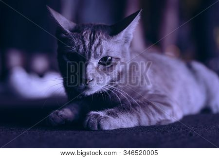 Cute Wild Cat Laying Down Resting Under Glare Of Nearby Neon Lights At Night - Young Feline Animal L