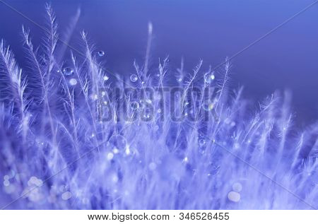 Small drops of water on abstract plants. Mood light. Nature background. Bird feather structure. Macro photo.