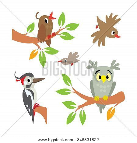 Birds. Illustration Set, Owl, Woodpecker And Other