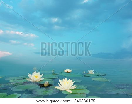 Beautiful summer landscape with white lilies. Lake with water lily flowers. Blooming waterlily nymphaea flowers in pond