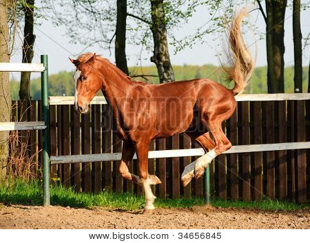 Horse Playing In Paddock