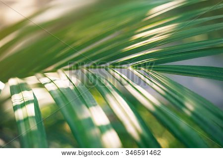 Palm Leaf Pattern With The Shadow. Nature Background.