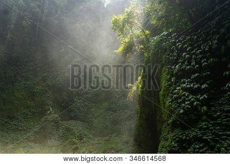 Morning Fog In Dense Tropical Rainforest Background