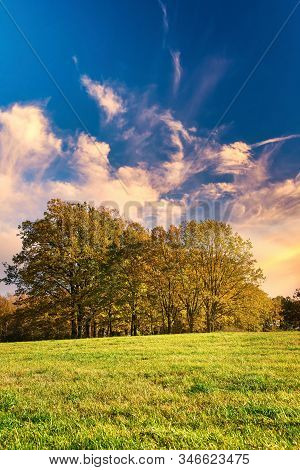 Vertical Photo With Few Trees. Trees Have Orange Autumn Leaves. Plants Are On Meadow With Green Gras