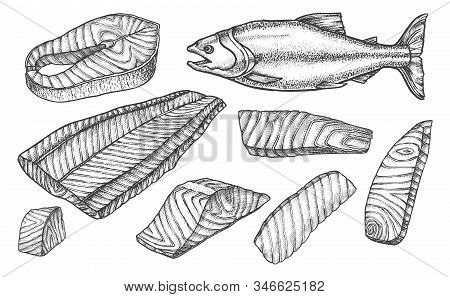 Salmon Fish Cut Filet And Steaks Slices, Vector Sketch Icons. Salmon Fish Cut Parts For Cooking Reci
