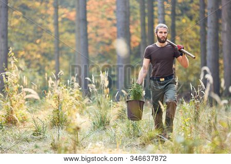 Forester in the forest at afforestation with pine seedling for sustainability