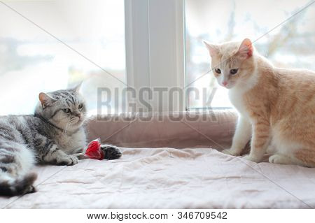 Two Cats Are Sitting By The Heart-shaped Candy