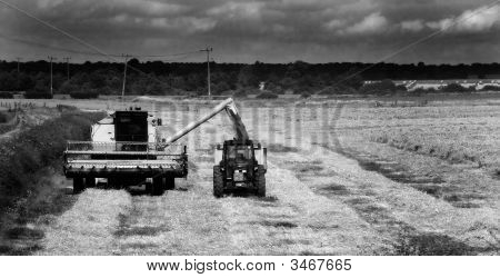 At Work In The Field Monochrome