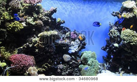 Corals And Fish Background
