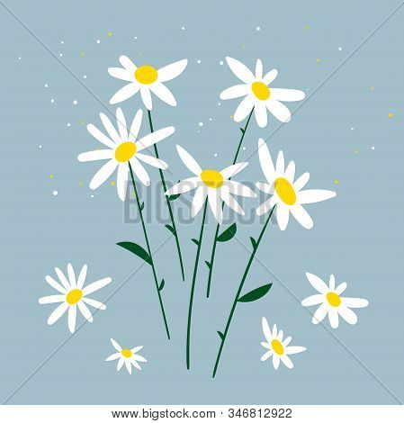 Vector Illustration Of Chamomile. Bouquet Of Daisies On A Blue Background. Design For Herbal Tea, Na