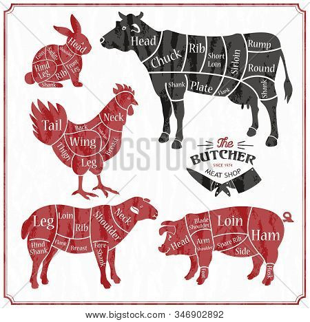 Animal Farm Set. Cut Of Beef, Pork, Lamb, Chicken. Poster Butchers For Groceries, Meat Stores, Butch