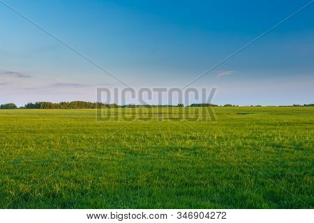 Countryside Rural Wheat Field Landscape Under Spring Blue Clear Sunny Sky. Agricultural Landscape.