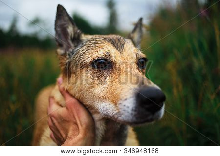 Owner Caring And Stroking Happy Friendly Dog