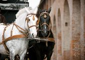 horses in carriage against the antique castle poster