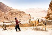 Elderly iranian shepherd with a donkey. Iran poster