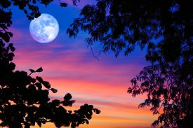 Blue Full Hunger Moon On Night Sky Back Silhouette Tree And Sunset Cloud