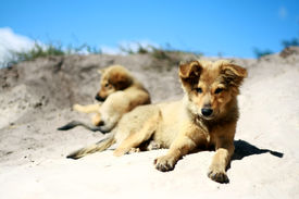 Puppies in the sun