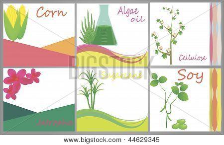 Biofuel Sources