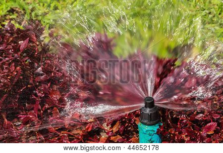 Sprinkler Head Showing Radius Of Water Droplets For Bush And Lawn Watering