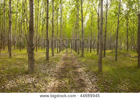 Fresh green forest with dirtroad