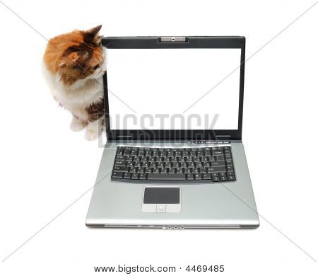 Red-haired Cat Near Notebook