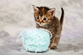 Kitten play with wool brown blue ball large fun poster
